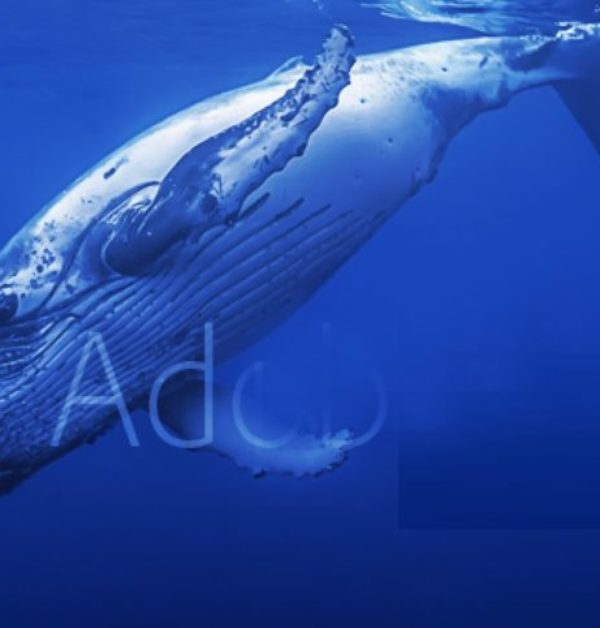Adobe Whale